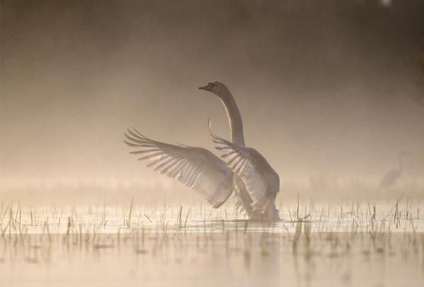 7ème : Swan - Yannick  LE BOULICAULT - Focale 49